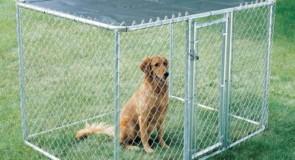 Recinto per cani fai da te, cosa serve e come costruirlo