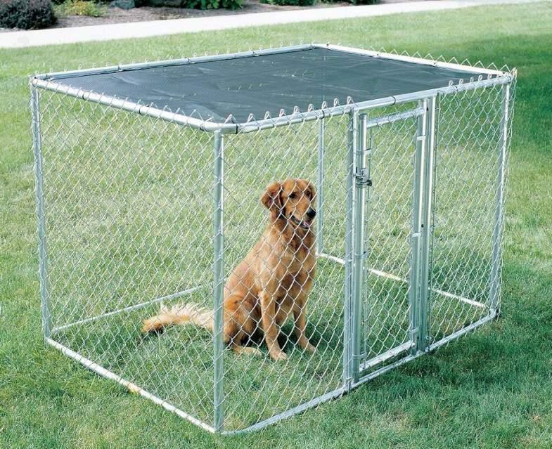 Recinto Per Cani Fai Da Te Cosa Serve E Come Costruirlo Giornale