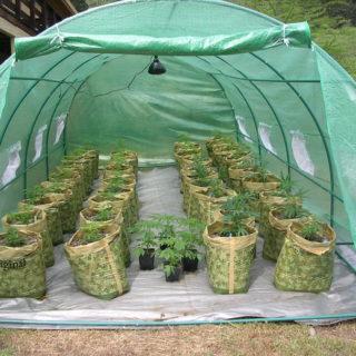 Cannabis: usare la tecnica della light dep per avere un miglior raccolto.