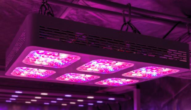 Lampade led per la coltivazione indoor