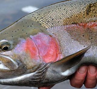 Pescare le trote nel lago, tutto quello che devi sapere