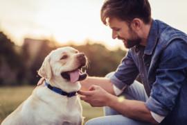 Perché i cani leccano il padrone? Ecco alcuni motivi