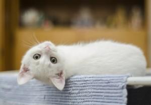 Come accudire un gattino appena nato