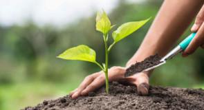 Concimi organici: tutto quello che devi sapere