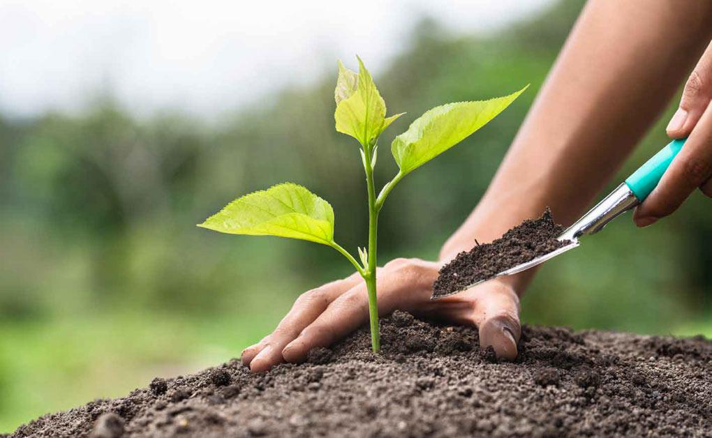 biovegetal-vantaggi-del-fertilizzante-organico